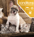 Best Pet Insurance for Pre-existing Conditions