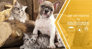 Best Pet Insurance for Speciality Coverage