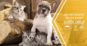 Best Pet Insurance with the shortest waiting period