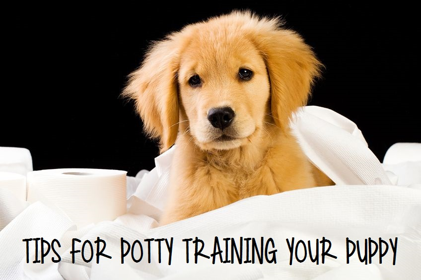 Tips for Potty Training Your Puppy
