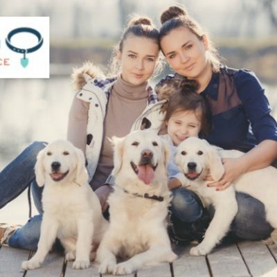 Figo Pet Insurance Review