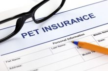What to Look for When Buying Pet Insurance