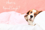 Kennel Cough Facts and Prevention