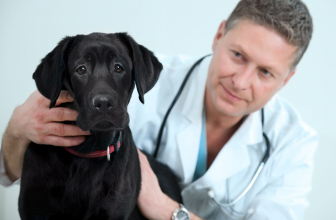 Things You Must Consider Before Picking Your Pet's Vet