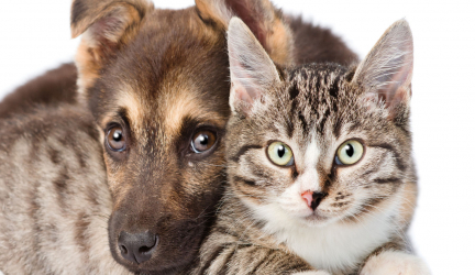 Are We Over Vaccinating Our Cats and Dogs?
